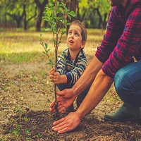 Little boy planting tree with with the help of an adult.
